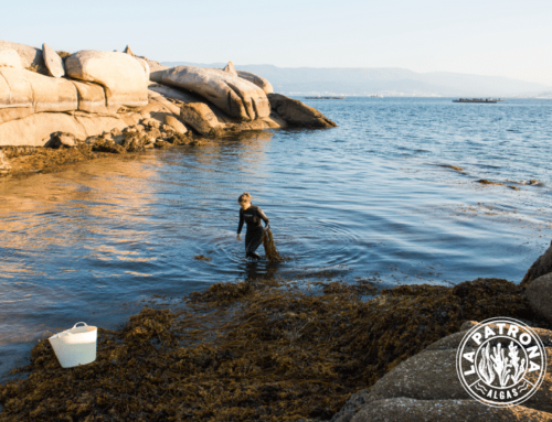 Seaweeds: The sea vegetables to discover